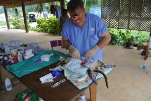 veterinary internship in the cooks