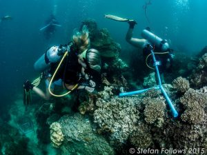 marine research internship