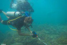 marine internship thailand