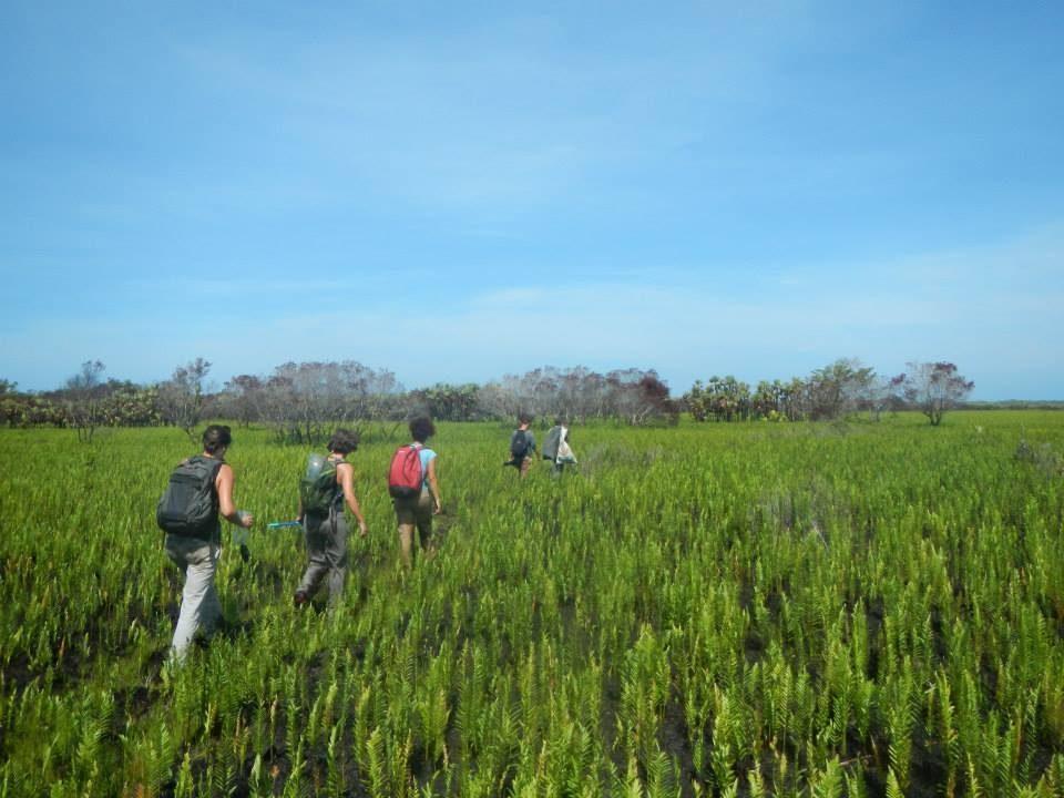 Wildlife Research Internship - Honduras
