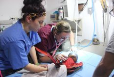 veterinary internship guatemala
