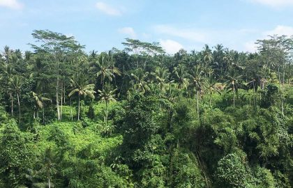Bali environmental conservation internship