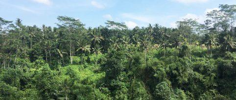 Bali environmental conservation internship