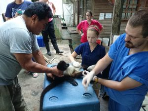 veterinary internship guatemala