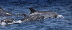 dolphin research internship