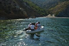 Dolphin research internship in Greece