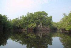 mangroves Guatemala