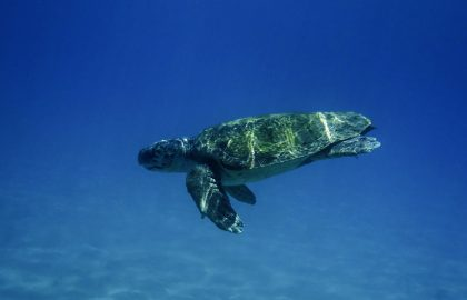 sea turtle conservation internship