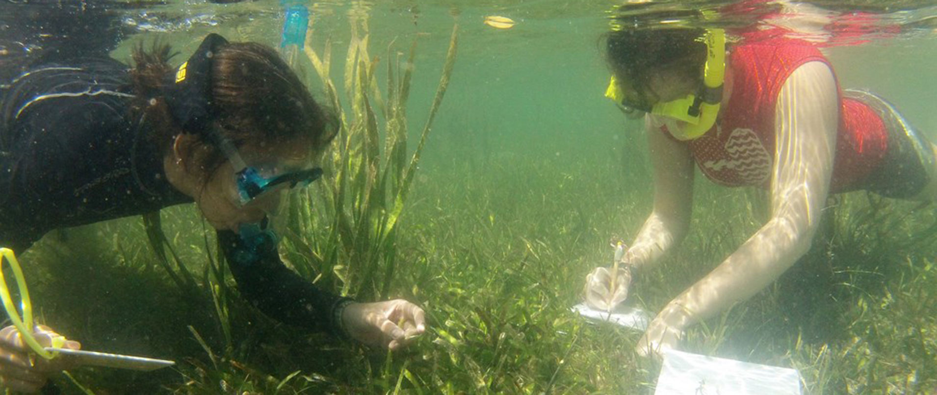 Marine-Conservation internship in the Philippines