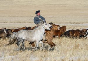 TV and Print Journalism Internship in Mongolia