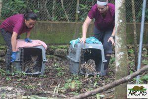 wildlife conservation guatemala