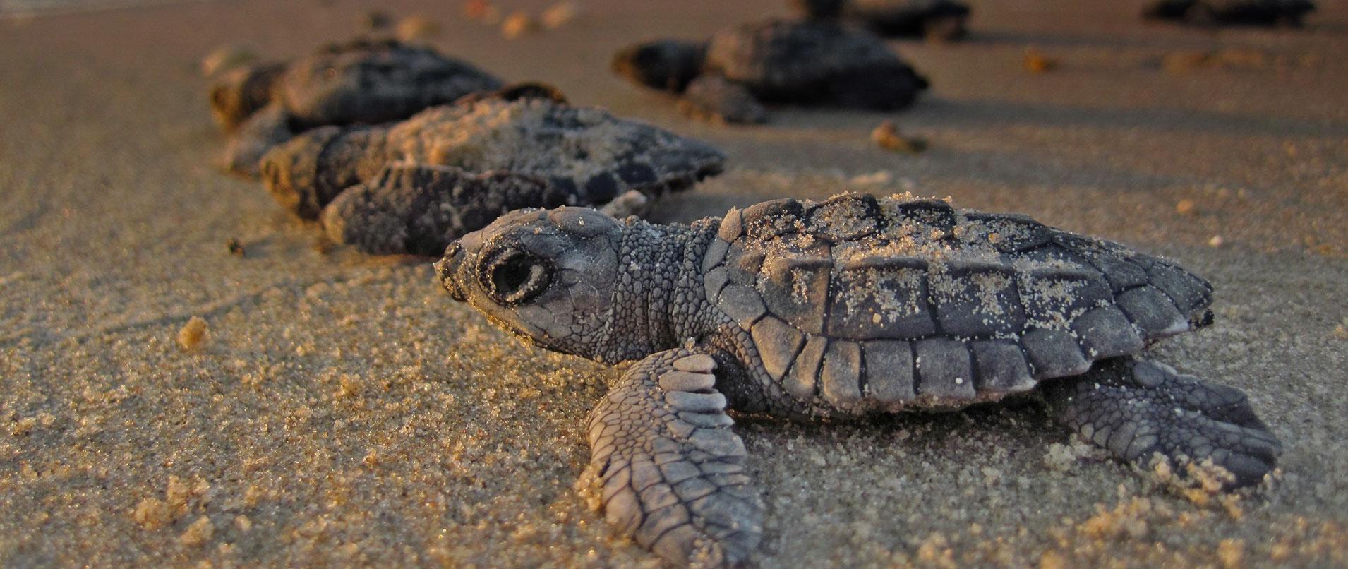 sea turtle internship