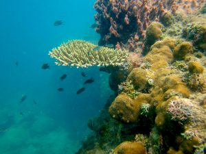tropical marine conservation