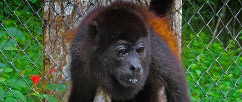 wildlife rehabilitation internship