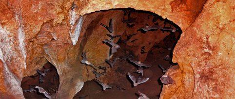 wildlife research internship Honduras