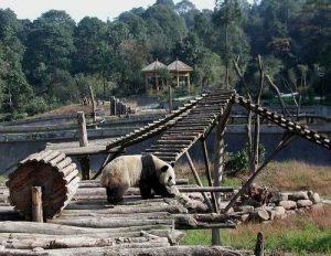 panda volunteering