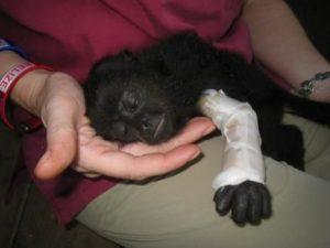 Deandra Chipilliquen - Primate Rehabilitation in Belize
