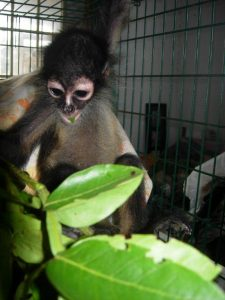 Michelle Scanlon – Primate Rehabilitation in Belize