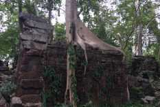temple conservation cambodia