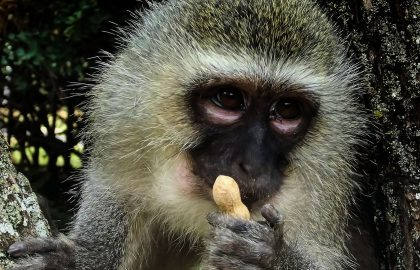 primate rehabilitation