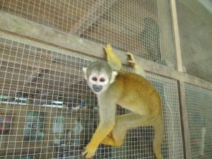 Rick Gurinder - Wildlife Rehabilitation in Peru