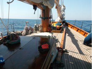Sarah Murray Dolphin Conervation Project in Italy 3