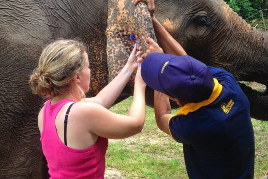 Katherine Bollag - Asian Elephant Veterinary Course in Laos