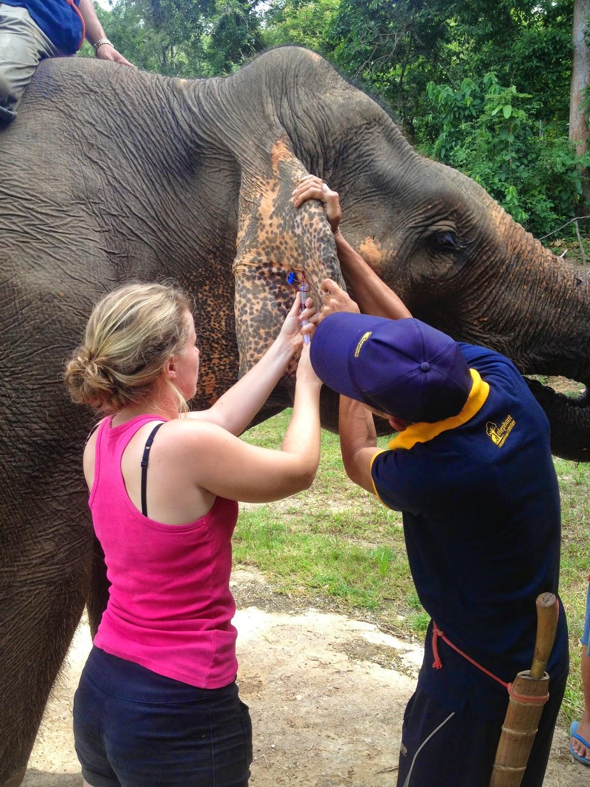 Katherine Bollag - Asian Elephant Veterinary Course in Laos