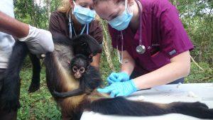 veterinary internship