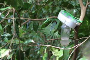 orchid-bee-trap