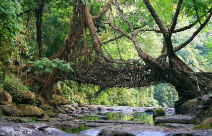 agro-ecotourism-expedition-in-meghalaya-main-image