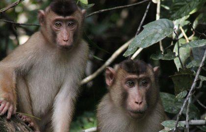malaysia-zookeeper-project