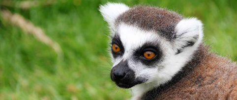 forestry-and-wildlife-conservation-in-madagascar