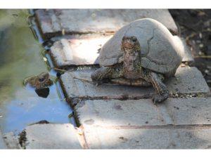 Marine Park and Animal Rescue in Costa Rica