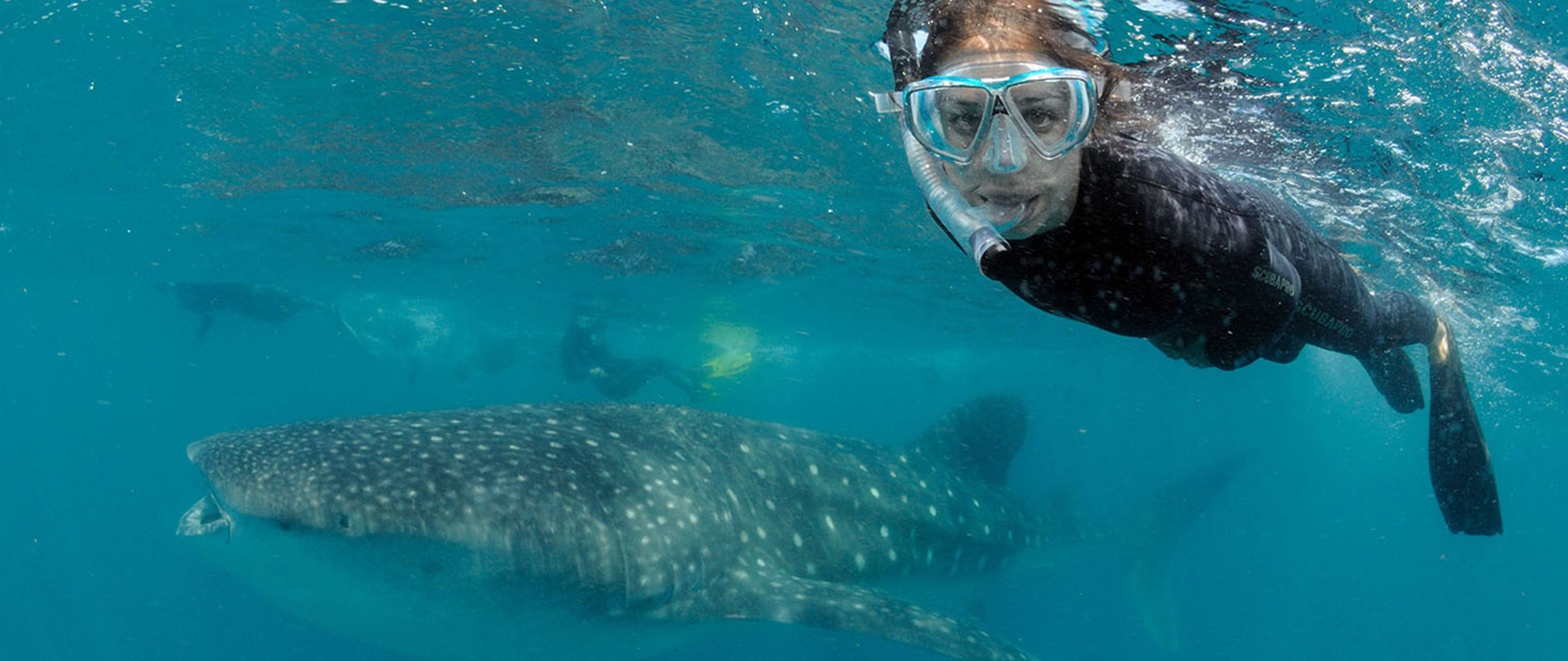 Mozambique-Whale-shark-internship