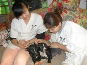 Veterinary-Internship-in-Trinidad-and-tobago