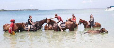 Equine Therapy Internship in Trinidad & Tobago