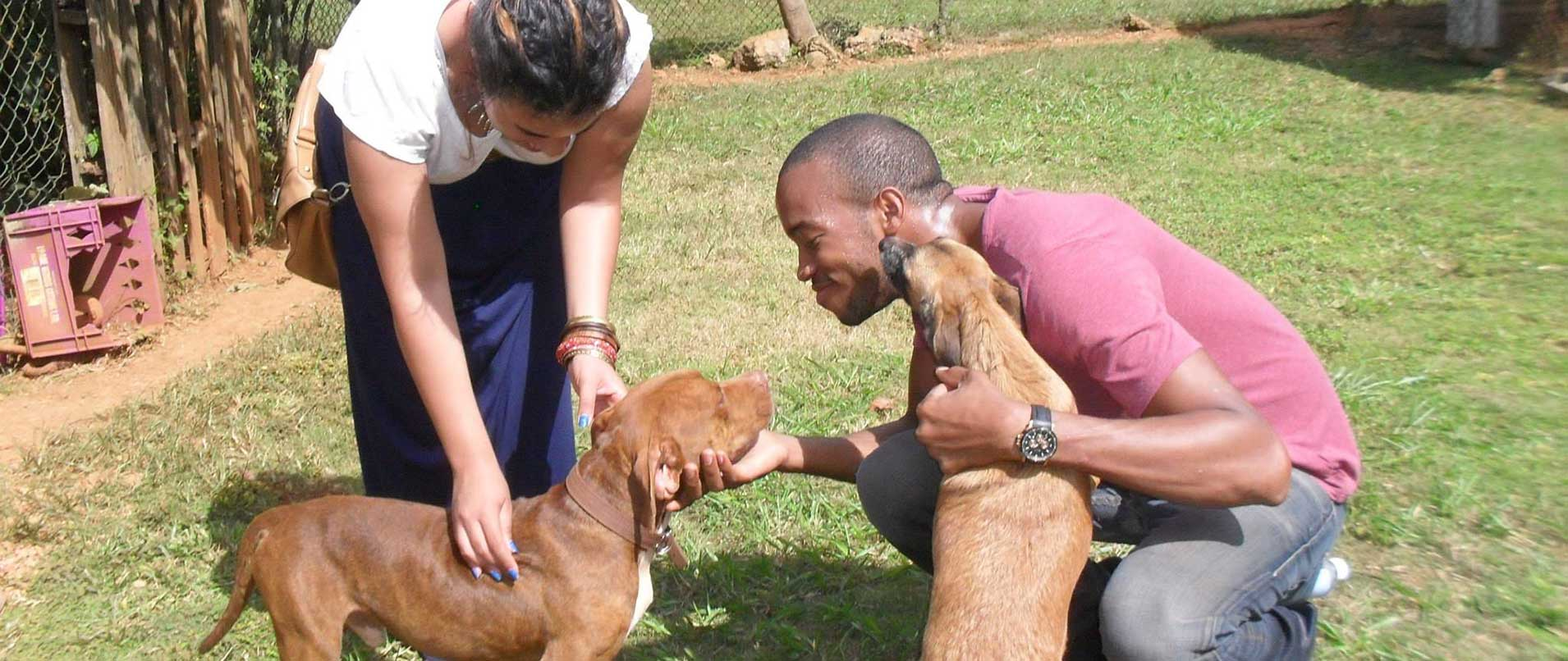 Veterinary-Internship-in-Trinidad-and-tobago