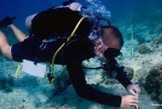 Marine researcher internship Philippines