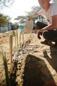 reforestation and conservation-peru