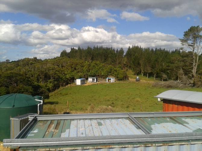 Conservation project in New Zealand-00