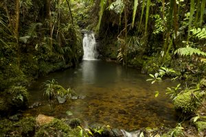 Environmental Conservation in New Zealand