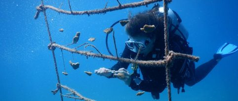 StEstatius marine conservation