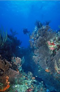 Coral Reef & Marine Park Conservation in St Eustatius