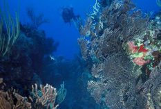 Coral Reef & Marine Park Conservation in St Eustatius