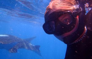 Whale Shark Conservation Project in Mozambique