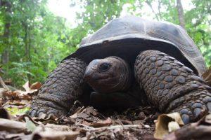 Marine-Conservation-in-Seychelles