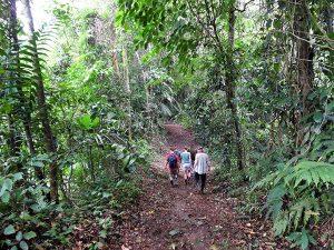 Daily trip trough the jungle