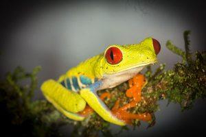 environmental-internship-in-Costa-Rica-1