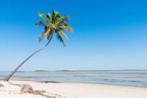 Marine Conservation & Local Community Development in Mozambique